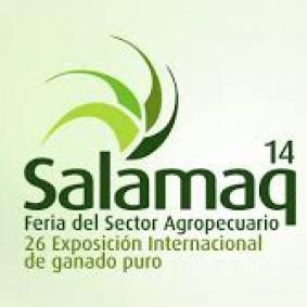 salamaq